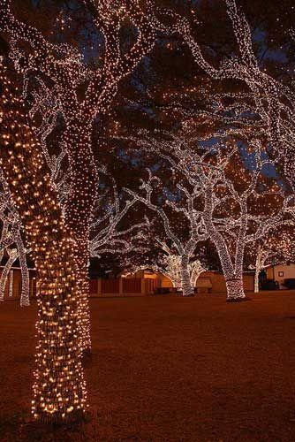 Lampki ogrodowe świąteczne choinkowe oplatające pnie i gałęzie drzew
